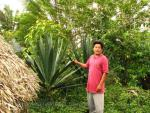 Mayan man showing a large spiked plant folk remedies holistic cures, displaying