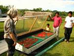 mayan brothers showing a home made solar dryer filled with hot peppers