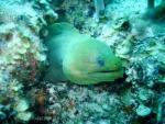 Green/blue eel peeking out from green/blue rock