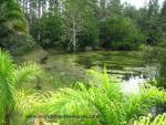 Pond with lush foliage in every color of green