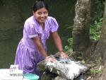 Young Mayan woman scrubbing clothes on a rock, living Mayan culture